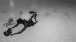 world champion freediver alexey molchanov capturing bullsharks in playa del carmen mexico