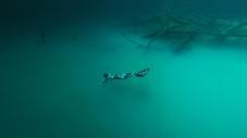 World champion freediver Alessia Zecchini playing in cenote Angelita, Mexico